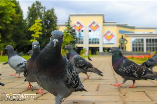 В Национальной библиотеке подведены итоги фотокросса «В объективе – птицы»