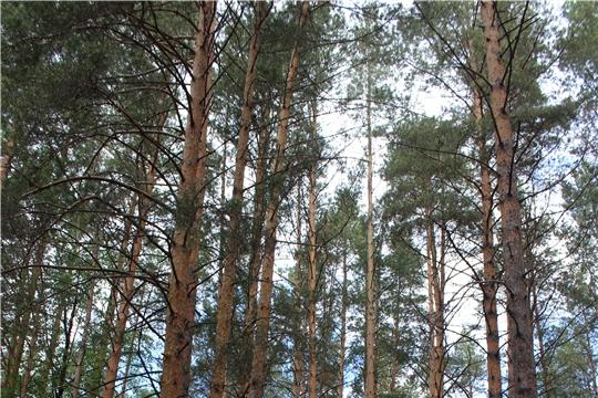 Введены коэффициенты к ставкам платы за единицу объема лесных ресурсов и лесного участка
