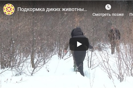 Подкормка диких животных зимой