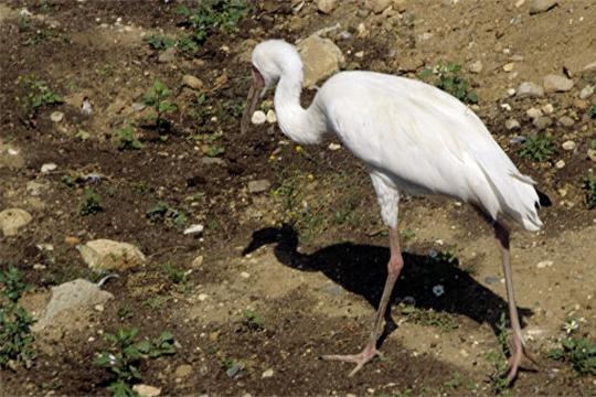 Минприроды России утвердило «дорожные карты» мероприятий, направленных на сохранение редких видов животных и птиц