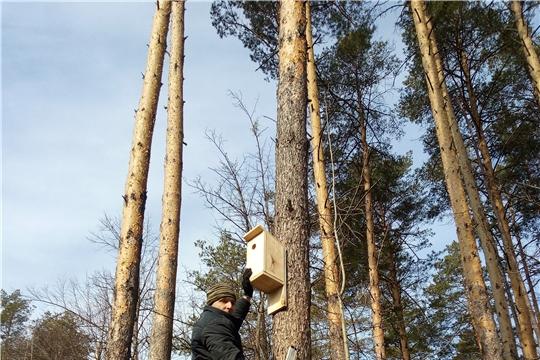 В Шумерлинском лесничестве привлекают скворцов для борьбы с вредными насекомыми
