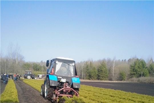 В Шемуршинском лесничестве начались лесовосстановительные работы