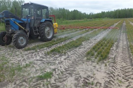 В Кирском лесничестве проведено профилактическое опрыскивание посевов сосны