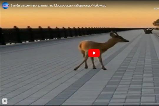 Бэмби вышел прогуляться на Московскую набережную Чебоксар