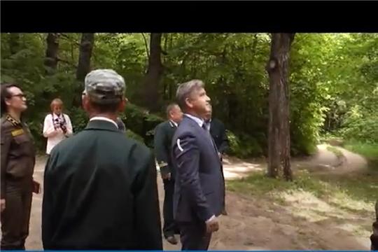 Чувашский дуб претендует на звание Российское дерево года
