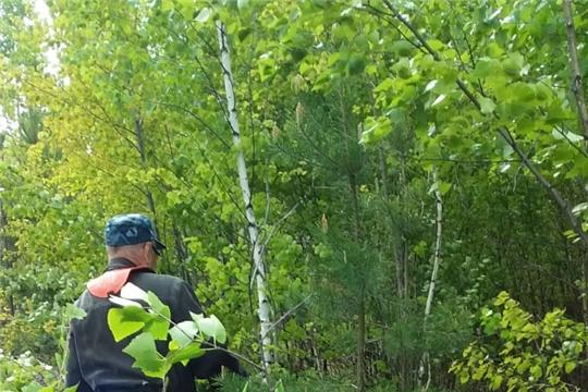 В Алатырском лесничестве проводят уход за молодыми насаждениями