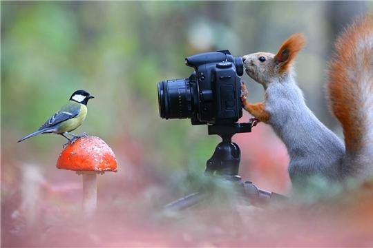 Фотокросс «В объективе – грибы»