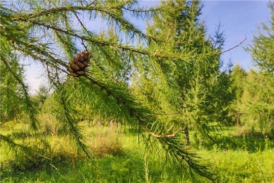 Чувашия удерживает позиции в национальном экологическом рейтинге регионов РФ