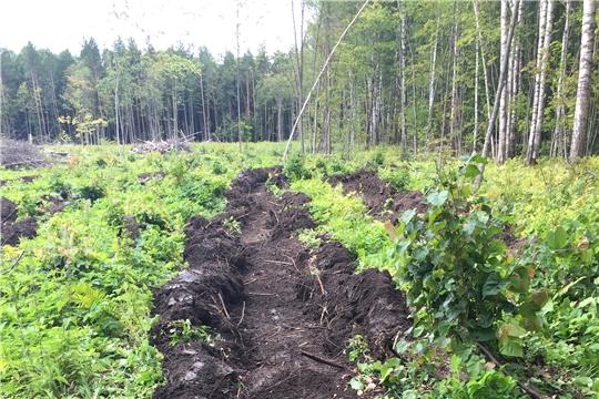В Вурнарском лесничестве завершаютсямероприятия по агротехническому уходу за лесными культурами