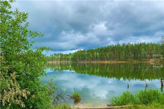 В 2021 году в России начнется второй цикл государственной инвентаризации лесов