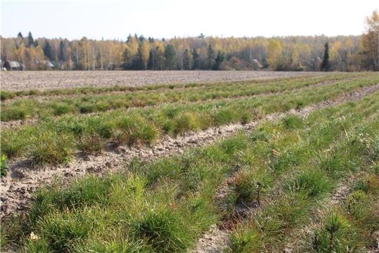 В Чувашии построят специальные теплицы для выращивания саженцев