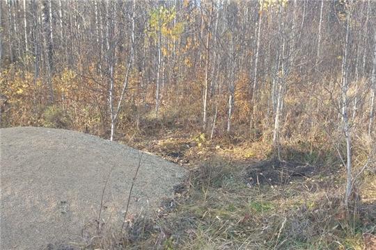 На территории общедоступных охотничьих угодий Батыревского района проведена подкормка кабанов