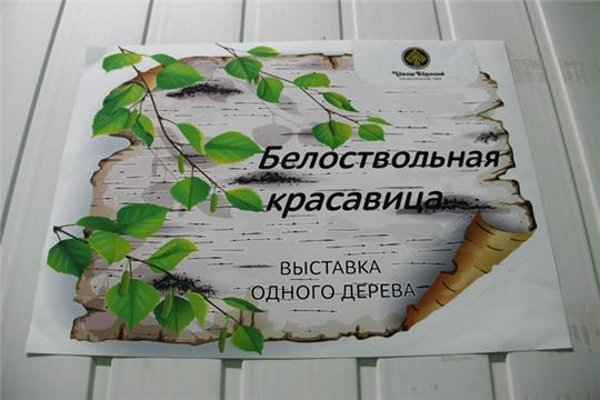 В национальном парке «Чаваш вармане» открылась выставка «Белоствольная красавица»