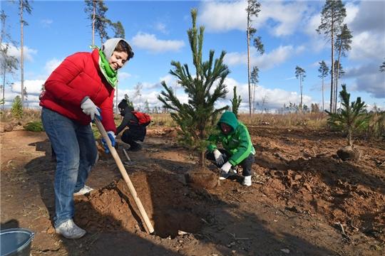 Владельцев земли обязали содержать защитные лесополосы