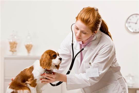 Рекомендации Минтруда РФ по зарплатам в госучреждениях дополнены разделом о ветеринарах
