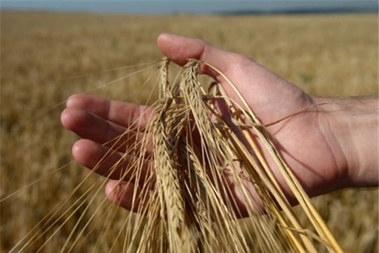 Качество зерна берут под госконтроль