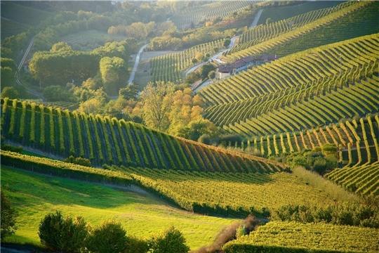 «Европейский зеленый курс» изменит сельское хозяйство