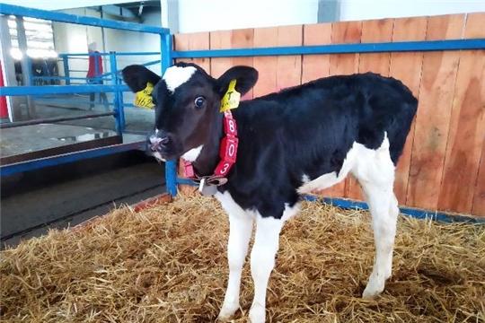 Эмбриональный центр сельскохозяйственного кооператива «АТЛАШЕВСКИЙ» получил первые плоды своей работы