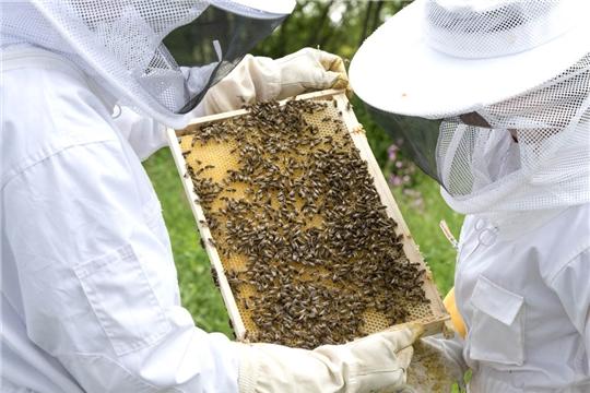 Работа по профилактике отравлений медоносных пчел пестицидами будет продолжена