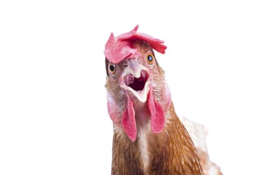 Птицеводство Чувашии в авангарде обеспечения продовольственной безопасности