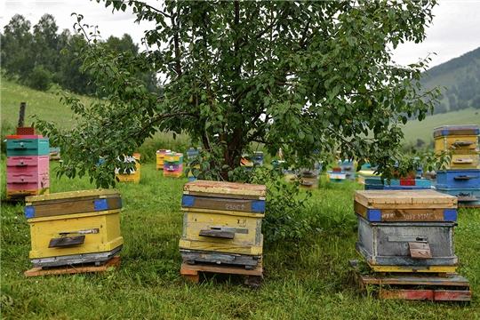 Минсельхоз в 2020 году вводит новые меры защиты пчеловодов Чувашии от убытков