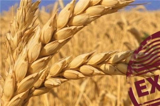 Квота на экспорт зерна из России выбрана в полном объеме