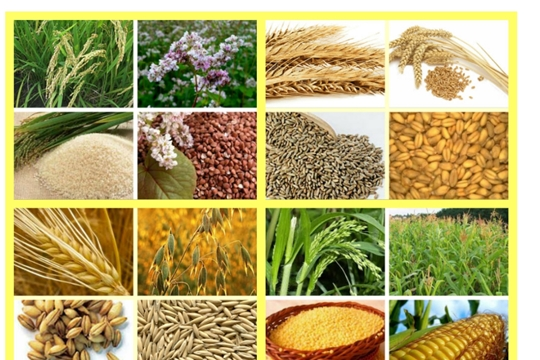 Минсельхоз России разработал проект закона «О семеноводстве»