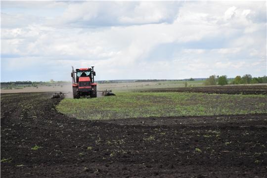 Аграрии Красночетайского района засеяли более 80 % ярового клина