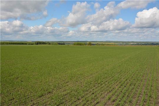 В Канашском районе план сева зерновых и зернобобовых культур выполнен на 100%