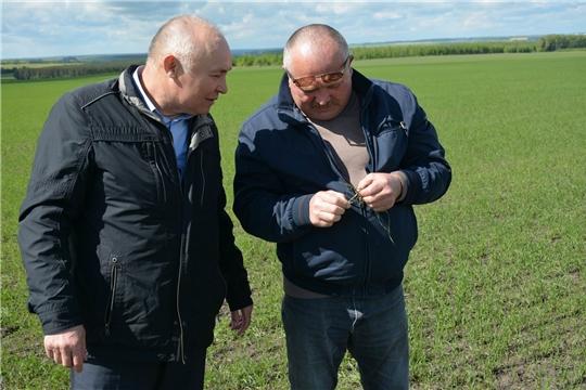 Работа на полях Вурнарского района ведется слаженно и оперативно