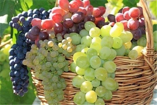 Минсельхоз и Финансовый университет при участии Россельхозбанка будут готовить виноградарей и виноделов по программе МВА