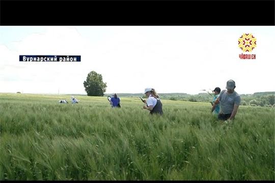 Сотрудники Россельхозцентра проверили поля Вурнарского района