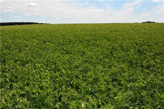 К концу 2021 года в Чувашии планируется ввести в оборот все неиспользуемые земли сельскохозяйственного назначения.