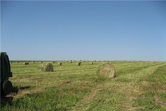 В хозяйствах Ибресинского района продолжается работа по заготовке кормов