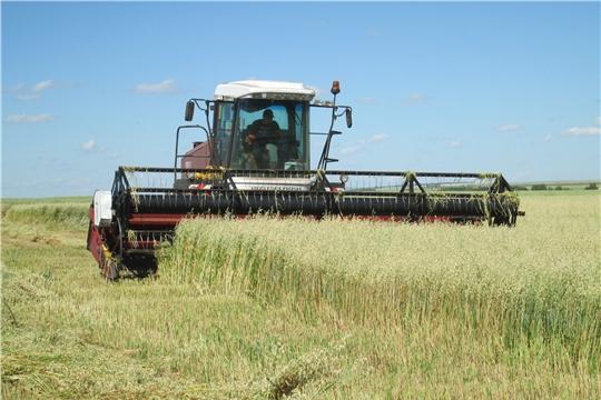 Сельскохозяйственные организации Яльчикского района приступили к уборке зерновых и зернобобовых культур