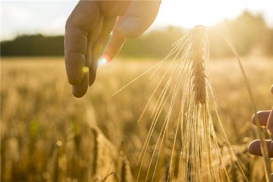 За первое полугодие чувашские аграрии застраховали посевов яровых культур в 4,8 раза больше, чем за аналогичный период 2019 года