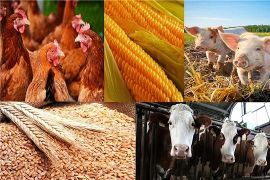 Объем производства сельхозпродукции в Чувашии за первое полугодие вырос на 3,5%