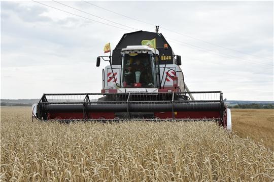К уборке зерновых и зернобобовых культур приступили в 11 районах Чувашии.