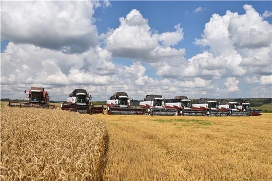 Урожайность озимых зерновых в хозяйствах Цивильского района превысила 60 ц/га