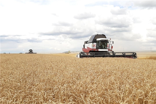 Аграриям Вурнарского района предстоит убрать 5076 га озимых зерновых культур