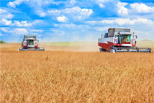 На 7 августа в республике намолочено 157,7 тыс. тонн зерна