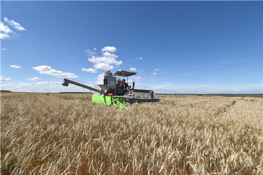 На опытных участках Госсорткомиссии по Чувашии началась уборка урожая