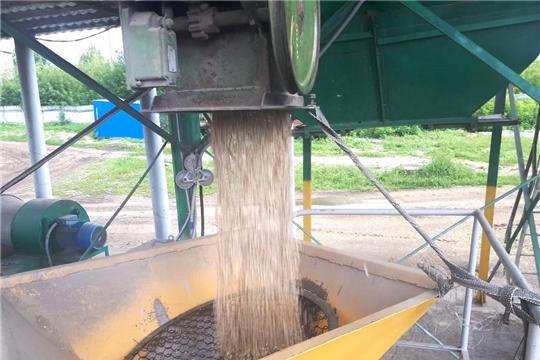 Приемка зерна Продфондом Чувашии ведется в несколько смен, без выходных