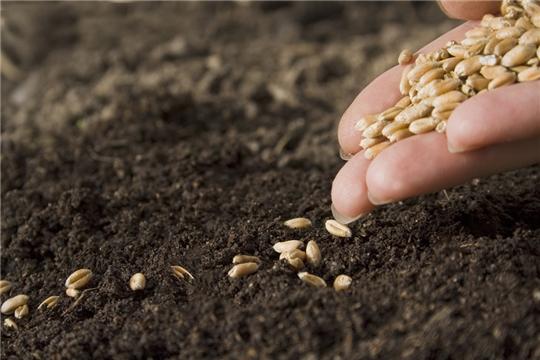 К севу озимых зерновых культур приступили хозяйства 5 муниципальных районов