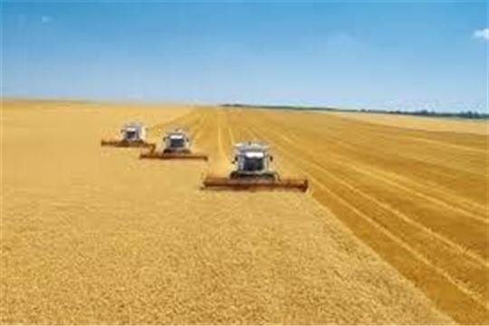 В Батыревском, Канашском, Яльчикском и Янтиковском районах республики убрано более половины площади зерновых культур