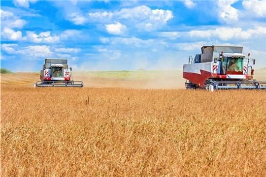 В хозяйствах республики намолочено более 500 тыс. тонн зерна