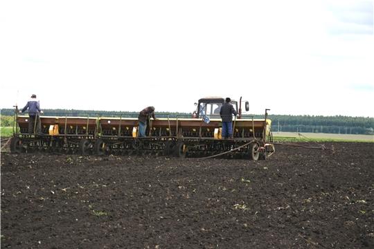 В хозяйствах Батыревского района намолочено 46043 тонн зерна при урожайности 34 ц/га
