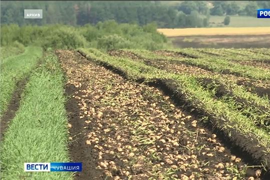 Урожайность картофеля в Чувашии