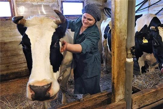 На 9 сентября 32 тысячи граждан республики получили субсидии на содержание коров