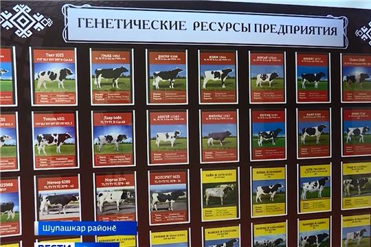 """""""Чувашское"""" пӗрлешӳре ӑратлӑ вӑкӑрсен куравӗ иртрӗ"""